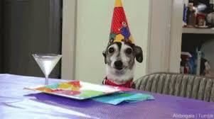 birthday dog.jpg