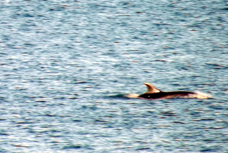DolphinsEveryDay.jpg