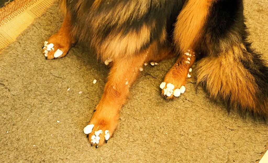 Jazz's Toes.jpg