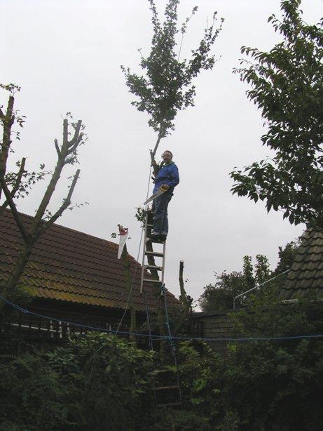 mel tree 2.jpg