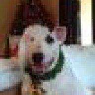 DogShowDiva