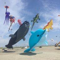 kitetraveller